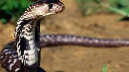 Desktop Exchange wallpaper » Animals pictures » Snakes wallpapers 689