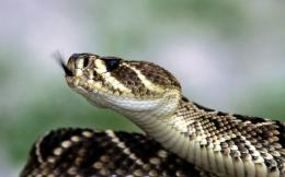 close up wallpaper high definition close up wallpaper snakes photo 872