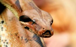 Desktop Exchange wallpaper » Animals pictures » Snakes wallpapers 253