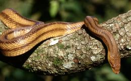 close up wallpaper 8 high definition close up wallpaper snakes photo 1462