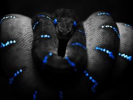 Blue Snakes Wallpapers Snake wallpaper 1537