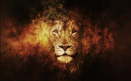 fire lion source http mrwallpaper com lion fire art wallpaper 1748