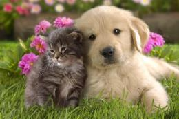 Cuteness Overload Kitten And Puppy Wallpaper Free Money Stuffs 509