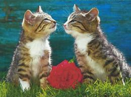 Two Kittens Kissing With A Rose 1596
