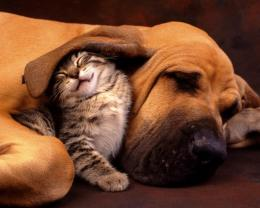 Tender moments friends cats dogs animals 1280x1024 1561