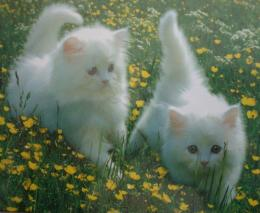 Cute WallpapersCute Kittens Photo10501766Fanpop 1874