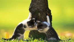 Secret kiss lovely 2 kittens tree grass 1280x720 1205