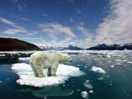 Polar Bear Pictures: Polar Bear Wallpaper Pictures 765