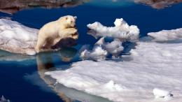 download brave polar bear wallpaper in animals wallpapers with all 607