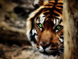 Wallpaper Collections: Wild Animals Wallpapers #2 1626
