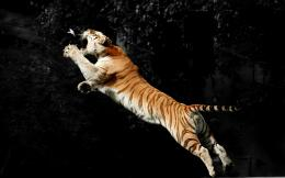 colour cool tiger hd jump tigre saltapixel tube your image source 1573