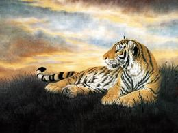tiger,tiger sitting on beautiful grass ground ,wallpapers,pictures 683
