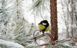 1280x800 Wallpaper titmouse, bird, winter, branch, tree, hoarfrost 826