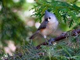 Spring up tree beautiful bird titmouse HD Wallpaper 151