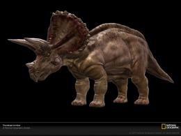 Triceratops, Dinosaur Wallpaper, Download, PhotosNational 1962