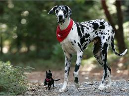 PicturesPool: Dalmatian Dogs wallpapers 820