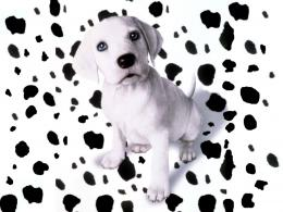 Dalmatian Wallpapers 1678