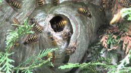 WASP NEST REMOVAL VIDEOYouTube 484
