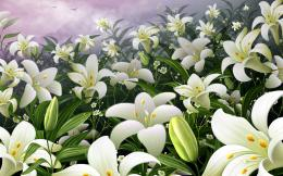 white lilies flowers wallpaper white lilies flowers wallpaper white 246