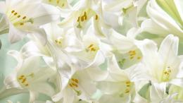 Easter Lilies Wallpaper 1920x1080 Easter, Lilies 1618
