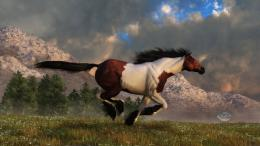Pinto Mustang Galloping by deskridge on DeviantArt 352