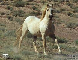 Wild Horses Running in Pasture | Download Popular ScreensaversHD 830