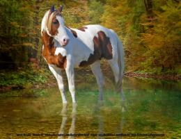 Related Pictures amazing horse pictures pictures of horses 182