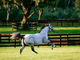 horse wallpapers com bulkupload wallpapers All%20Breeds running pinto 269
