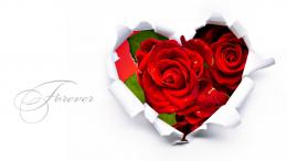 Love HD Wallpapers with Rose Flowers Heart Red | HD Wallpapers Rocks 1185