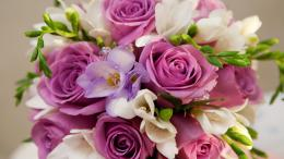 Womens Day Purple roses in a bouquet for women on March 8 055846jpg 513