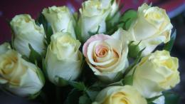 International Womens Day Beautiful white roses for women 056318jpg 565