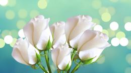 Womens Day Beautiful white roses on a blue background for women on 1710