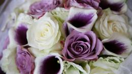 Purple roses in a beautiful bouquet on March 8 wallpapers and images 845
