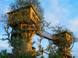 Top 20 Beautiful And Amazing Tree House Wallpapers,Pics | HDhut 114