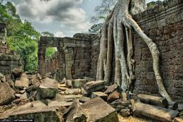 wpid18913 Tree Root at Ancient Temple Angkor Wat Cambodia jpg 158