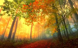 forest trees nature landscape tree autumn fall wallpaper background 1911