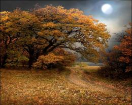 Moon fall path forest trees overcast light wallpaper 403