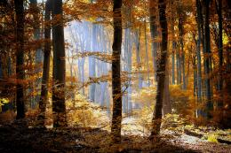 forest autumn foliage trees leaves orange yellow light nature 1955