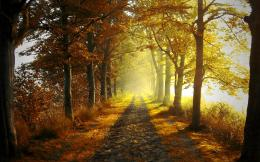 Autumn forest light wallpaper 209
