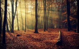 Sunlit autumn forest wallpaperNature wallpapers#17405 1410