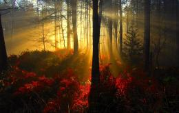autumn morning light wallpaper tags forest sunrays morning autumn 793