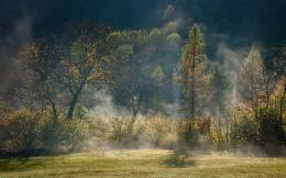 Wallpaper forest, fog, trees, mist, autumn, light wallpapers nature 1518