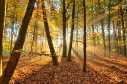 Download Nature Forest Autumn Trees Light Wallpaper | HDWallWide com 291
