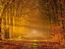 Fantasy autumn forest park light nature HD Wallpaper 913