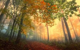 forest leaves path roads color autumn fall seasons sunlight light 1089