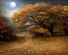 MOON FALL, autumn, fall, forest, light, moon, overcast, path, scenery 1075