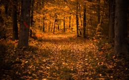 Autumn Forest Trees Light Leaves Path hd wallpaper #1589656 1408