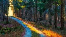 Autumn forest trees road light nature wallpaper 442