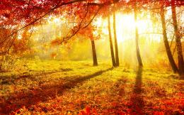 nature autumn forest trees leaves burgundy grass sun light wallpaper 1956