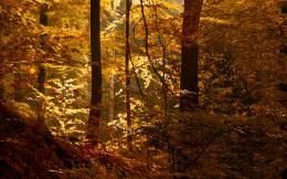 landscapes trees forest woods autumn fall light wallpaper background 1987